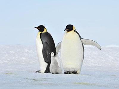企鹅粪便沉积物,揭示大气环流变化秘密